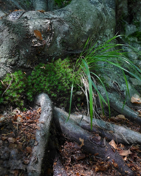 Wurzeln, Waldboden